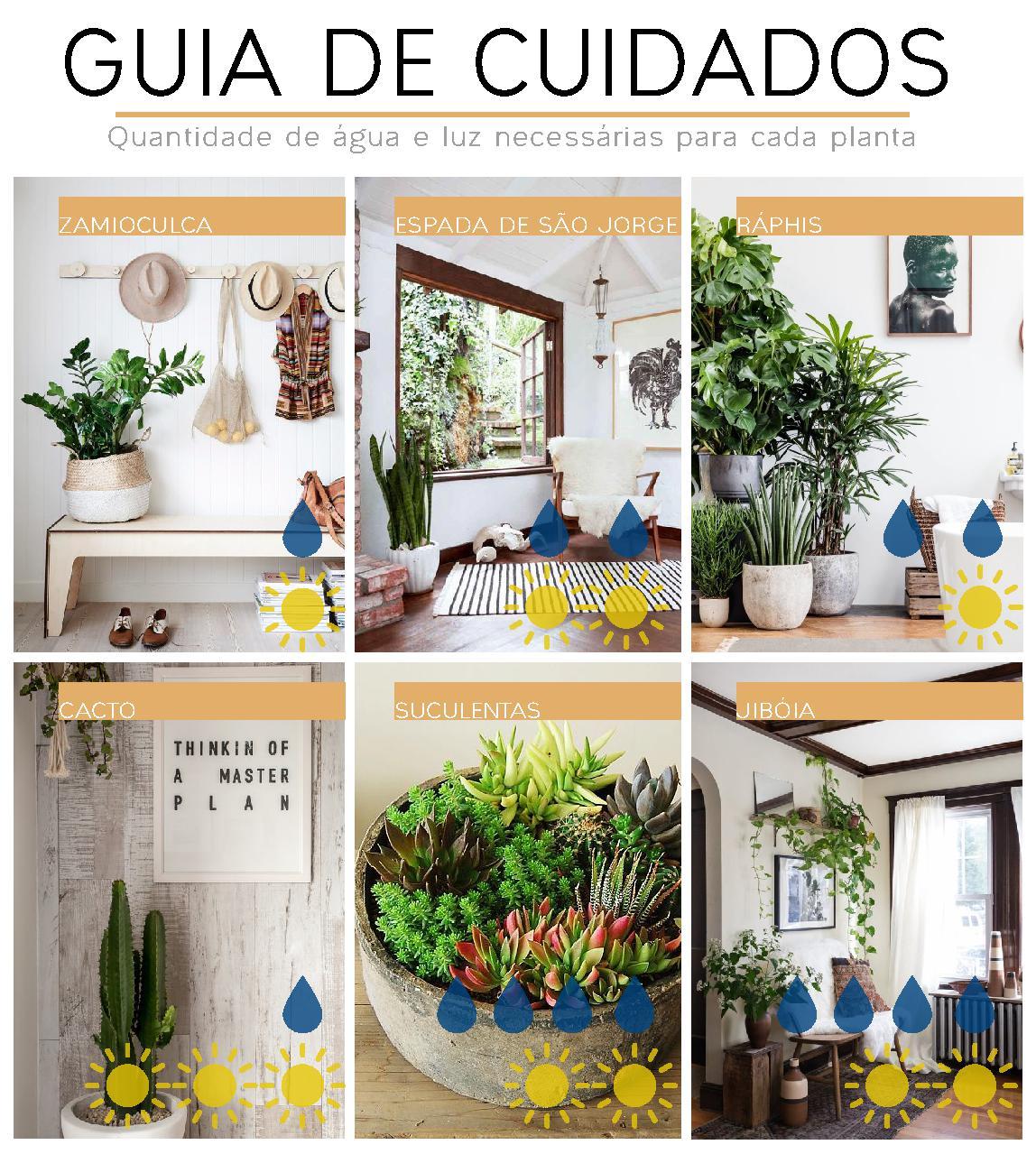 guia de cuidados para plantas internas